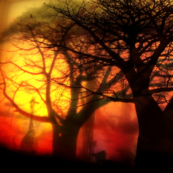 Safari Africa Travelogue Savanna Sunset on Fire - 9x11 Lightbox by Mini-Cinema by Mini-Cinema (Detail)